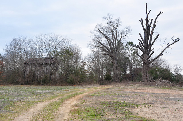 Home sweet home. Old tobacco barn and tree by Flickr user snowleslie99